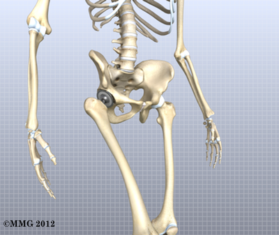 artificial joint replacement of the hip, anterior approach, Skeleton