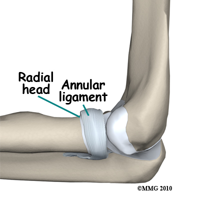 adult_elbow_fx_radial_head_anatomy02