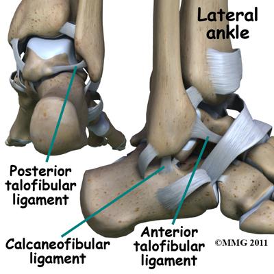 ankle_arthroscopy_ligaments
