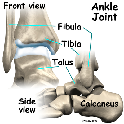 ankle_fusion_anatomy01