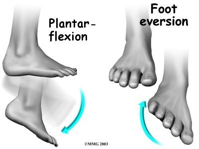 ankle_peroneal_sublux_anat03