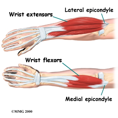 elbow_anatomy07c