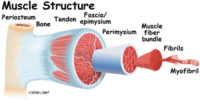 general_muscle_cramps_anatomy01