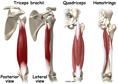 general_muscle_cramps_anatomy02
