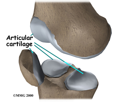 knee_cart_surg_anatomy01