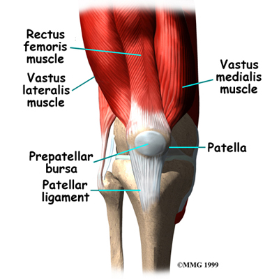 knee_prepatellar_anatomy_01