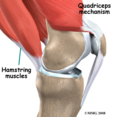 knee_tendonitis_quadriceps_anatomy01