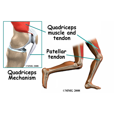 knee_tendonitis_quadriceps_anatomy02