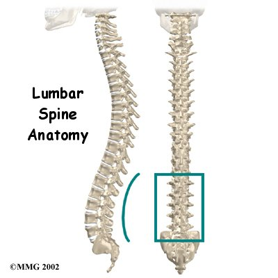 lumbar_anatomy_intro01