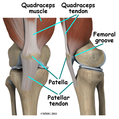new_knee_arthroscopy_anatomy02