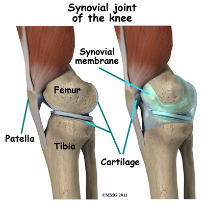 knee_arthroscopy_synovial_joint03