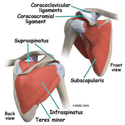 shoulder_arthroscopy_anatomy_muscles01