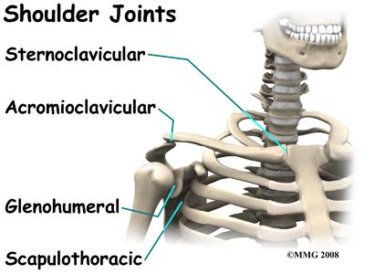 shoulder_dislocation_anatomy03