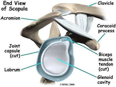 shoulder_dislocation_anatomy05
