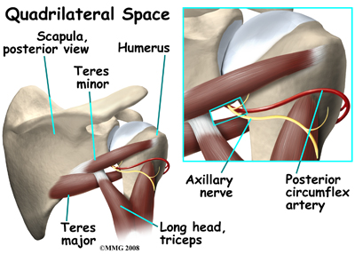 shoulder_quad_space_anatomy01
