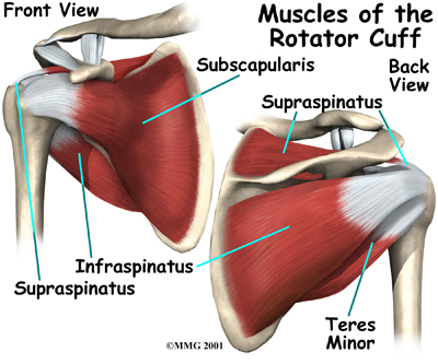shoulder_quad_space_anatomy04