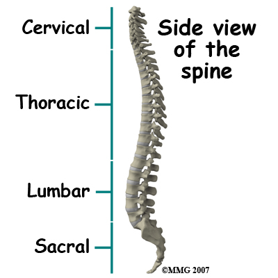 spinal tumors | central orthopedic group, Cephalic Vein