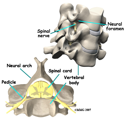 spinal_tumor_anatomy02