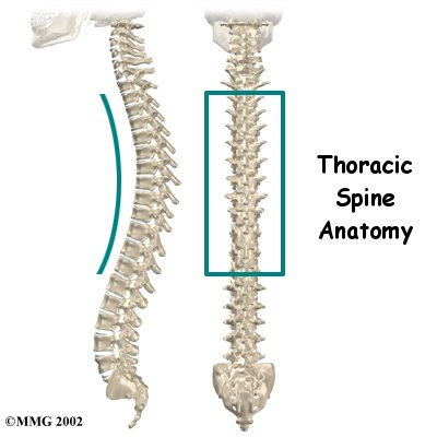 thoracic_spine_intro01