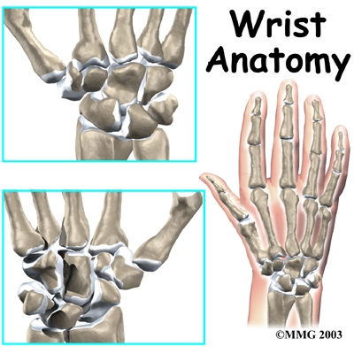 wrist_anatomy_intro01