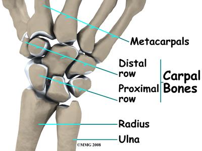 wrist_tfcc_anatomy01