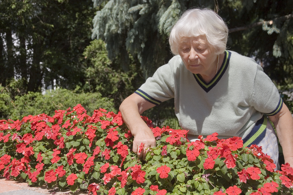 Elderly Woman Pruning Flowers